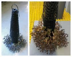 making of a live coral christmas tree u2013 s e a aquarium dolphin
