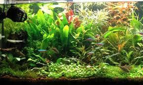 japanese aquascape aquascaping for beginners swell uk