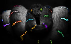 snake wallpaper android apps on google play