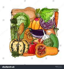 square vegetables fresh food pumpkin artichokes stock vector
