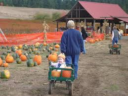 Roloffs Pumpkin Patch In Hillsboro Or by The Skogen Family Roloff Farms The Pumpkin Patch