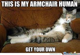 Mean Cat Memes - mean cat by cer993 meme center