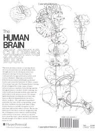 human brain worksheet design inspiration brain anatomy coloring