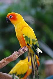97 best birds of live images on pinterest animals beautiful