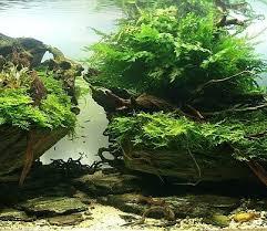 best 25 live aquarium ideas on pinterest fish tank live