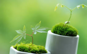 Green Plants Green Plants Wallpaper 22832