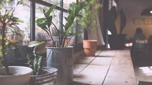 livingroom types of indoor plants indoor hanging plants small