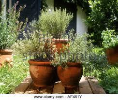 various herbs in terracotta pots on garden bench with rustic wheel