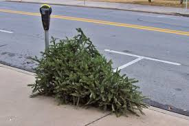 christmas tree recycling available throughout january in