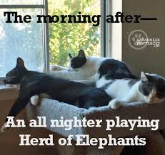Friday Cat Meme - friday memes just for you savannah s paw tracks