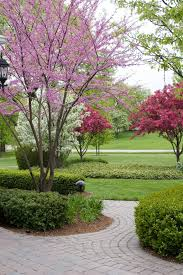 top 10 ornamental trees for the landscape