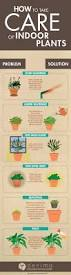 12 Best Plants That Can by Best Indoor House Plants A Guide To Greener Room And Greener Life