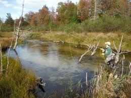 blog true north trout part 4