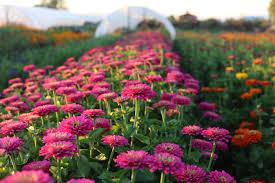 evening garden walk floret flowers