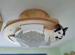 cat wall furniture cat wall furniture kimidesign