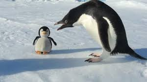 Penguin Meme - penguin and plush penguin penguins know your meme