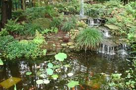 great ponds and other good water gardening ideas csmonitor com