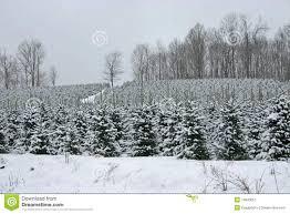 a white christmas tree farm christmas lights decoration