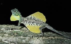 5 vertebrate groups britannica com