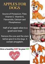 can dogs eat apples is it a poisonous dog treat let u0027s dig it out