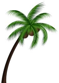 coconut palm tree png clip best web clipart