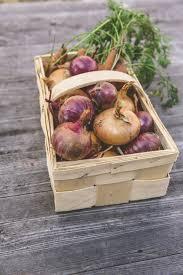 free images food harvest produce vegetable colorful garden