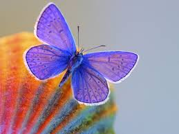 188 best color palettes butterflies images on pinterest