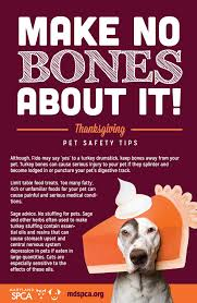 thanksgiving safety tips for cats and dogs maryland spca