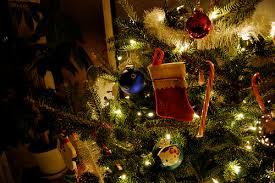 Christmas Tree Shopping Tips - blog susie u0027s yard care