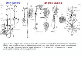 chandelier cells the anatomy of language sydney rice houston usa