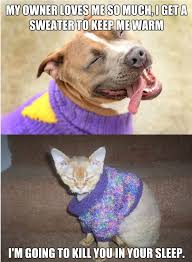 Omg Cat Meme - cat vs dog memes which are too funny viral slacker