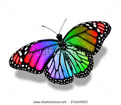 colourful butterfly stock images royalty free images vectors