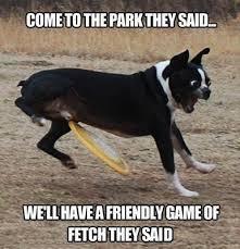 Sad Animal Memes - dog memes part 5 the good the sad and the funny dog memes