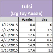 australian shepherd 10 months raising a mini aussie growth stats