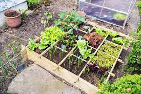 container vegetable gardening ideas winter easy to diy container