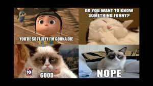 Good Grumpy Cat Meme - funniest grumpy cat memes ever pt 1 youtube