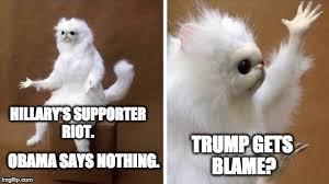 Cat Meme Images - wtf cat meme generator imgflip