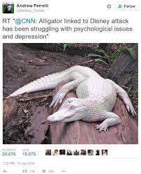 Alligator Memes - andrew ferrelli tweet 2016 disney resort alligator attack know