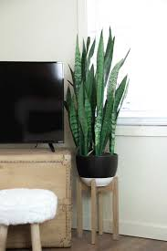 Plant Home Decor by Living Room Reveal Elements Of Ellis