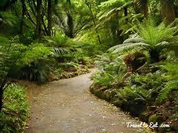 New Zealand Botanical Gardens Fern Garden Wellington Botanic Gardens Wellington New Zealand