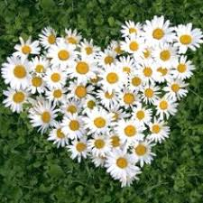 yellow daisy wallpapers секрет dreamlife hearts pinterest flower and wreaths