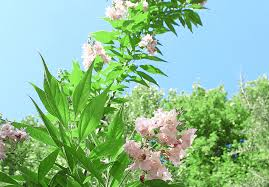 new mexico friendly trees osuna nursery