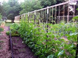 vegetable garden trellis gardening ideas