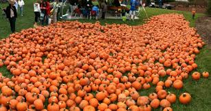 Pumpkin Patch St Louis Mo by 7 Things To Do This Weekend For 30 Or Less Arts Blog