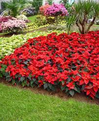 imagenes de jardines pequeños con flores claves para elegir plantas para nuestro jardn arquitecturaar flores
