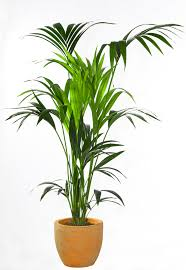 Best Inside Plants The Best Indoor House Plants And How To Buy Them Indoor House
