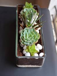 rectangular open terrarium only for bangalore delivery