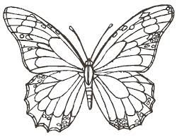 coloring pages of butterfly butterfly drawing pics how to draw butterflyjpg coloring pages