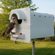Where Does The Barn Owl Live California Land Of The Barn Owl Barn Owl Box Company