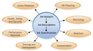 job analysis and hr activities human resource l concepts l
